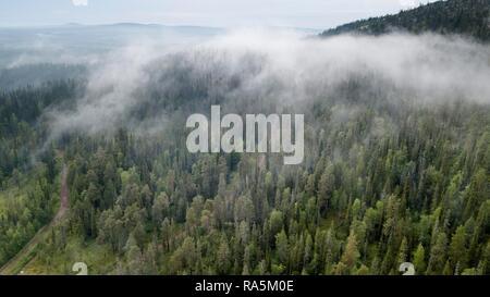 Drone shot, fog in boreal arctic forest, conifers, Salla, Lappi, Finland - Stock Photo