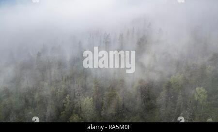 Drone shot, fog in boreal, arctic forest, conifers, deciduous trees, salla, Lappi, Finland - Stock Photo