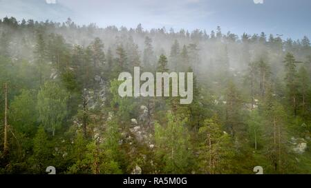 Drone shot, fog in boreal, arctic forest, conifers, deciduous trees, salla, Lappi, Finland - Stock Photo