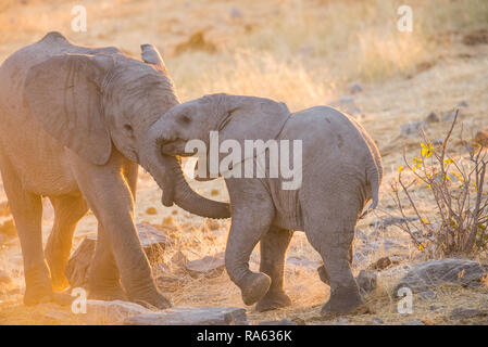 Small elephants playing - Stock Photo