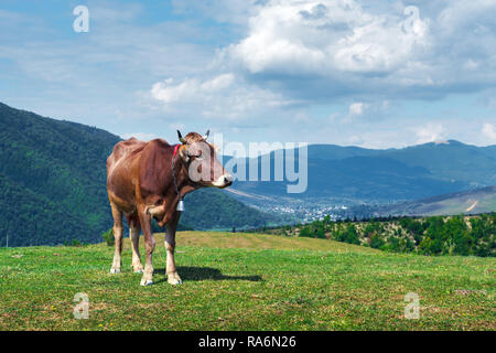 Cow on green pasture in mountains. Beauty view on green forest and blue hills - Stock Photo