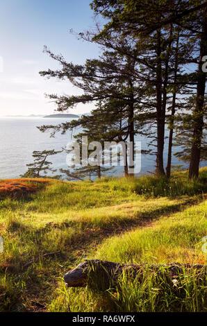 Trail along grassy shoreline, Jones Island Marine State Park, San Juan Islands, Washington State, USA - Stock Photo