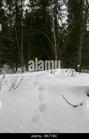 Animal footprints in snow - Stock Photo