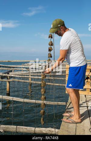 Oyster farming in the Bahia del Fangar, environs of the Ebro Delta Nature Reserve, Tarragona province, Catalonia, Spain - Stock Photo