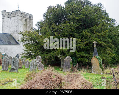 Ancient Yew Tree, Defynnog, Powys - Stock Photo