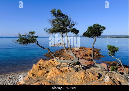 Plage de Palombaggia beach near Porto Vecchio, Corsica, France, Europe - Stock Photo