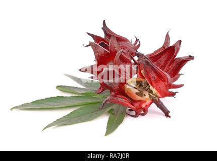 Hibiscus sabdariffa or roselle fruits - Stock Photo