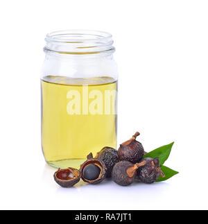 Soap nut tree isolated on  white background - Stock Photo