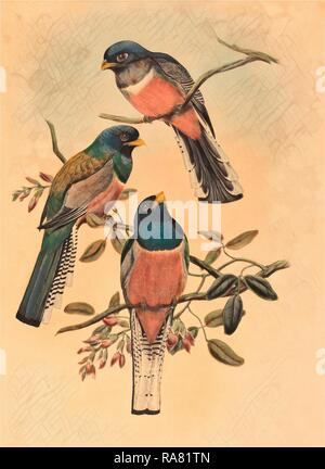 John Gould and W. Hart (British, 1804 1881 ), Trogan variegatus, probably 1836 1838, colored lithograph. Reimagined - Stock Photo