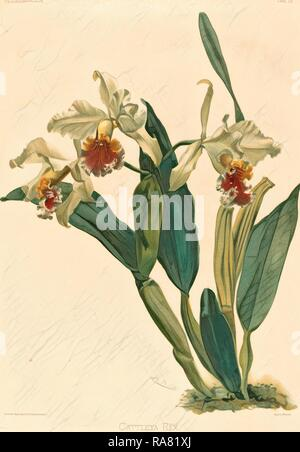 Gustav Leutzsch after Henry George Moon (German (?), active 19th century ), Cattleya Rex, lithograph. Reimagined - Stock Photo