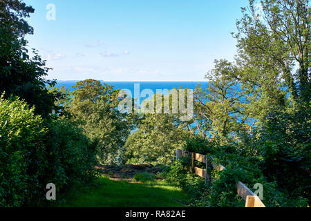 View from the slope through the trees to the Baltic Sea. In Lohme on the island of Rügen. - Stock Photo
