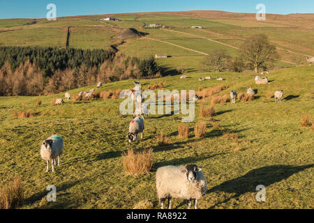North Pennines AONB landscape, view looking west over the Hudeshope valley in strong winter sunshine and a clear blue sky - Stock Photo