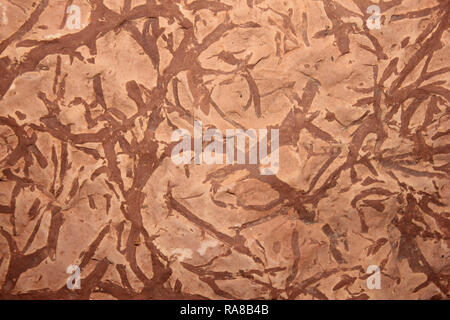 Trace Fossil Burrows - Stock Photo
