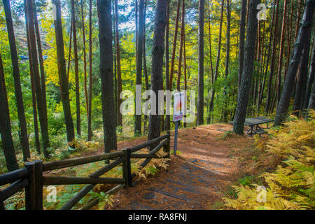 Pine forest in Autumn. Sierra del Rincon Biosphere Reserve, Madrid province, Spain. - Stock Photo