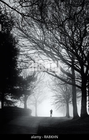 A day out in misty conditions at High Moor and Harrock Hill near Parbold, Lancashire. A lone figure cuts a silhouette against the trees and mist. - Stock Photo