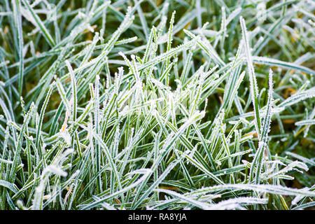 Frost morning in the garden. January 2018 - Stock Photo