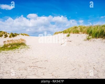 Sand dune with marram grass in nature reserve Het Oerd on West Frisian island Ameland, Friesland, Netherlands - Stock Photo