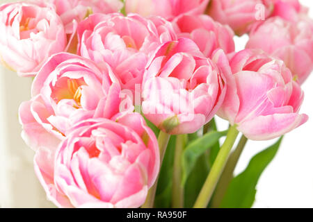 Tulip flower bouquet in shades of pink against white, nostalgic and romantic background template for florists or greeting cards - Stock Photo