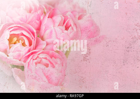 Tulip flowers in shades of pink, distressed grunge effect, nostalgic and romantic background template for florists or greeting cards - Stock Photo