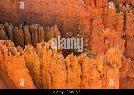 Bryce Canyon National Park, Utah, USA. Overlooking the Bryce Amphitheatre from the Rim Trail, showing Hoodoo rock formations. - Stock Photo
