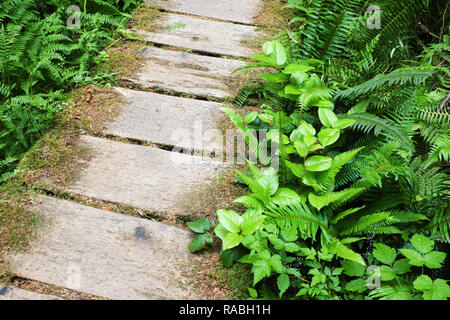 Boardwalk trail through old growth temperate rain forest, Sand Point Trail, Olympic National Park, Olympic Peninsula, Clallam County, Washington, USA - Stock Photo