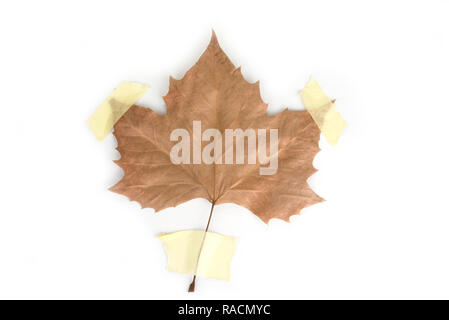 Taped dried up maple leaf. Ecology  concept.Save the planet - Stock Photo