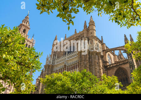 The gothic baroque Giralda belfry of Seville Cathedral seen from Patio De Los Naranjos, UNESCO World Heritage Site, Seville, Andalusia, Spain, Europe - Stock Photo
