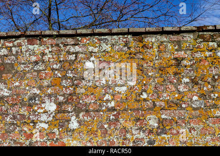 Wall - Building Feature, Surrounding Wall, Street, Brick Wall, Brick, City, Building Exterior, Backgrounds, Old, Sidewalk, Construction Industry, Cit - Stock Photo