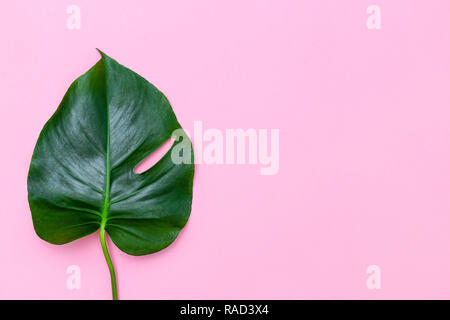 Monstera leaf on pink background. Copy space - Stock Photo
