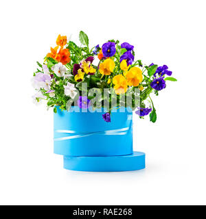 Blue gift box with pansy flowers isolated on white background clipping path included. Spring garden viola tricolor as holiday present, easter and moth - Stock Photo