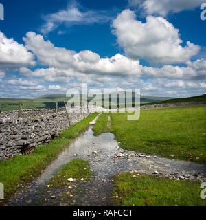 Pen-y-Ghent seen from near Borrins in Ribblesdale The Yorkshire Dales - Stock Photo