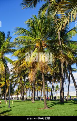 Palm trees in Lummus Park, South Beach, Miami, Florida, USA. - Stock Photo