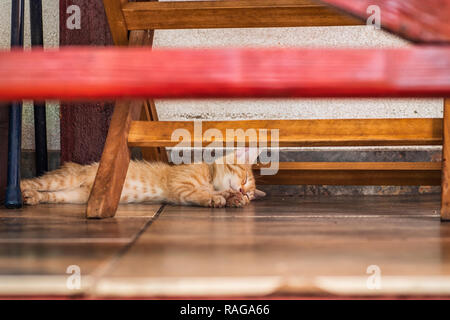 Cat under bench. Sleeping ginger cat in shadow of bench.Red little kitten lying under the bench on a summer day. - Stock Photo