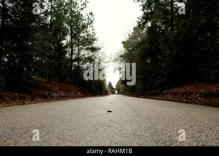 Empty country road in Texas surrounded by trees; pines, oaks. - Stock Photo