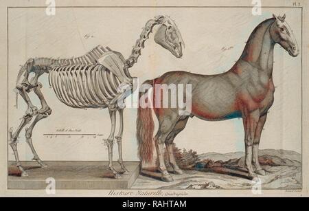Histoire naturelle, quadrupèdes, Encyclopédie méthodique, ou par ordre de matières, Bénard, fl. 1806-1830, Engraving reimagined - Stock Photo
