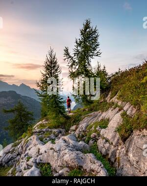 Hiker stands between two Larches (Larix), summit of Feldkogel, mountain landscape, view of Königssee at sunset, left Watzmann - Stock Photo