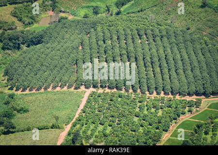 Top view green field agricultural area from mountain / Landscape of farm countryside in Thailand - Stock Photo