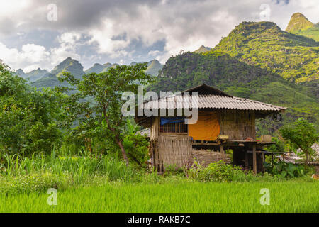 Vietnamese farmhouse sitting on the edge of a rice patty.  Ha Giang Loop, Ha Giang Province, Dong Van, Vietnam, Asia - Stock Photo