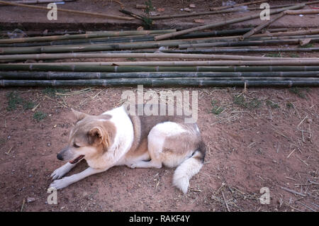 dog alone and sleeping on small stone. alone concept - Stock Photo