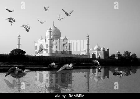 Taj Mahal reflected in Yamuna River view with bird flying across. - Stock Photo