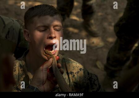 U.S. Marines drink cobra blood during Exercise Cobra Gold 17 at Camp Ban Chan Krem, Thailand, February 17, 2017. Cobra blood and flesh are used as nutrition in a scenario where sustenance is scarce. Royal Thai Marines demonstrated various methods of surviving in the jungle. Cobra Gold is the largest Theater Security Cooperation exercise in the Indo-Asia-Pacific region and is an integral part of the U.S. commitment to strengthen engagement in the region. The U.S. Marines are with Battalion Landing Team, 2nd Battalion, 5th Marine Regiment assigned to the 31st Marine Expeditionary Unit, III Marin - Stock Photo
