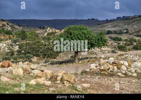 Tree, scenery, Akamas peninsula, Cyprus, Baum, Landschaft, Akamas-Halbinsel, Zypen - Stock Photo