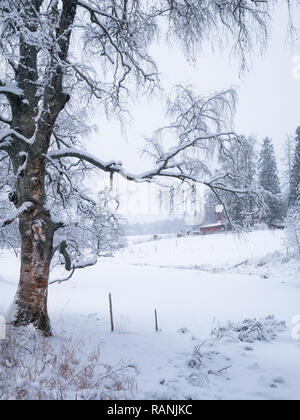 Scenic winter landscape with leafless silver birch and horse farm at cloudy day in Finland - Stock Photo