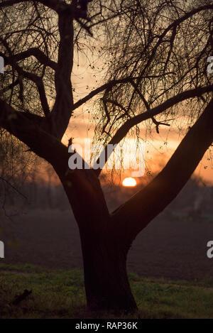 Sun setting behind a tree - Stock Photo