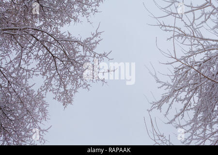 Tree Branches against the sky after a snowfall - Stock Photo