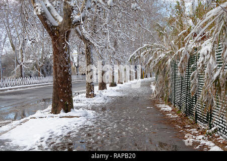 Tree Lined Avenue after a snowfall in Rome - Stock Photo