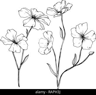 Vector Isolated Flax Illustration Element On White Background