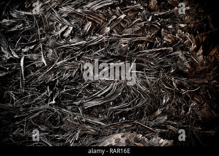 Tropical Plant Palm Tree Body Trunk Background - Stock Photo