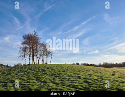 A small copse of Silver Birch stand next to a fairway on a quiet winters morning. Letham Grange Golf Course, Colliston, Arbroath, Angus, Scotland. - Stock Photo