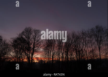 Dramatic blood red crimson sunset reflected off base of clouds against Winter treeline British native trees, Ash, Sycamore, Silver Birch - Stock Photo